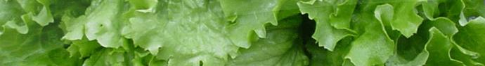 Ne coupez pas la salade un article d 39 - Pourquoi on ne coupe pas la salade ...