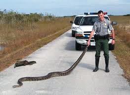 Serpent birman