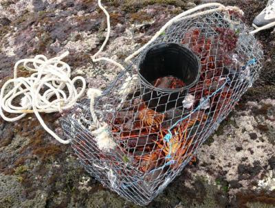 comment pecher des crabes